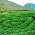Tân Lập – địa điểm tuyệt đẹp của Mộc Châu